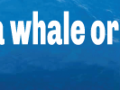 i-wont-go-to-whale-or-dolphin-show