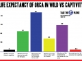 median-life-expectancy-orca-captivity-vs-wild