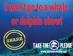 I wont go to a whale or dolphin show