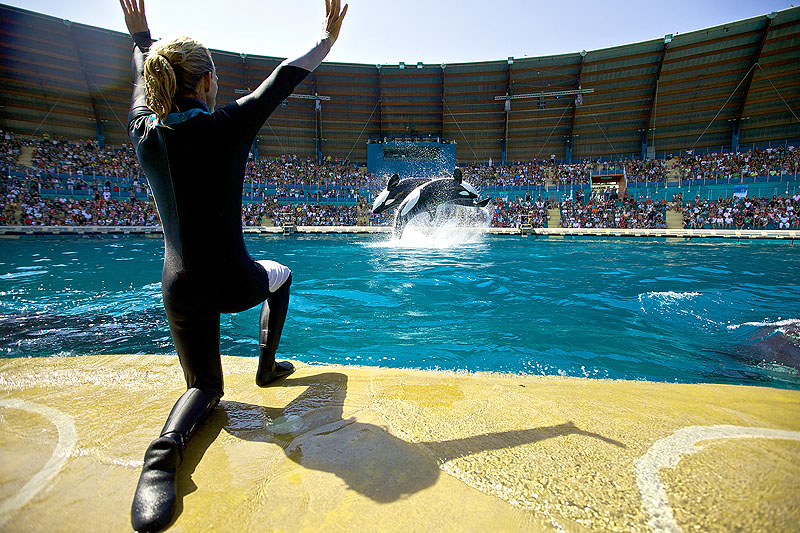 Orca performance at Marineland France