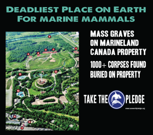 marineland canada mass graves