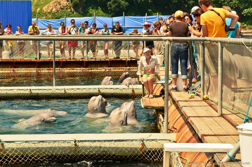 SeaWorld seeks to import Beluga Whales from Russia