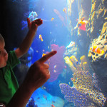 Child at Sea Life Aquarium