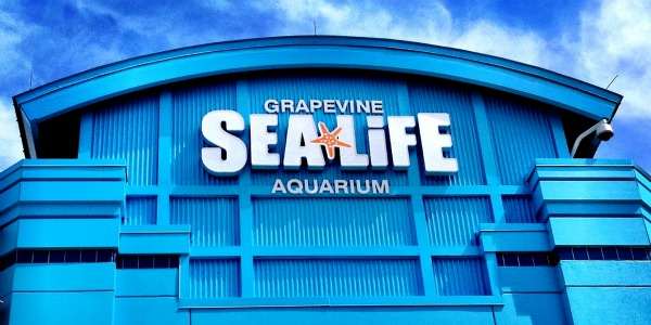 sealife-aquarium-grapevine